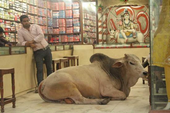 インドの商店にいた牛