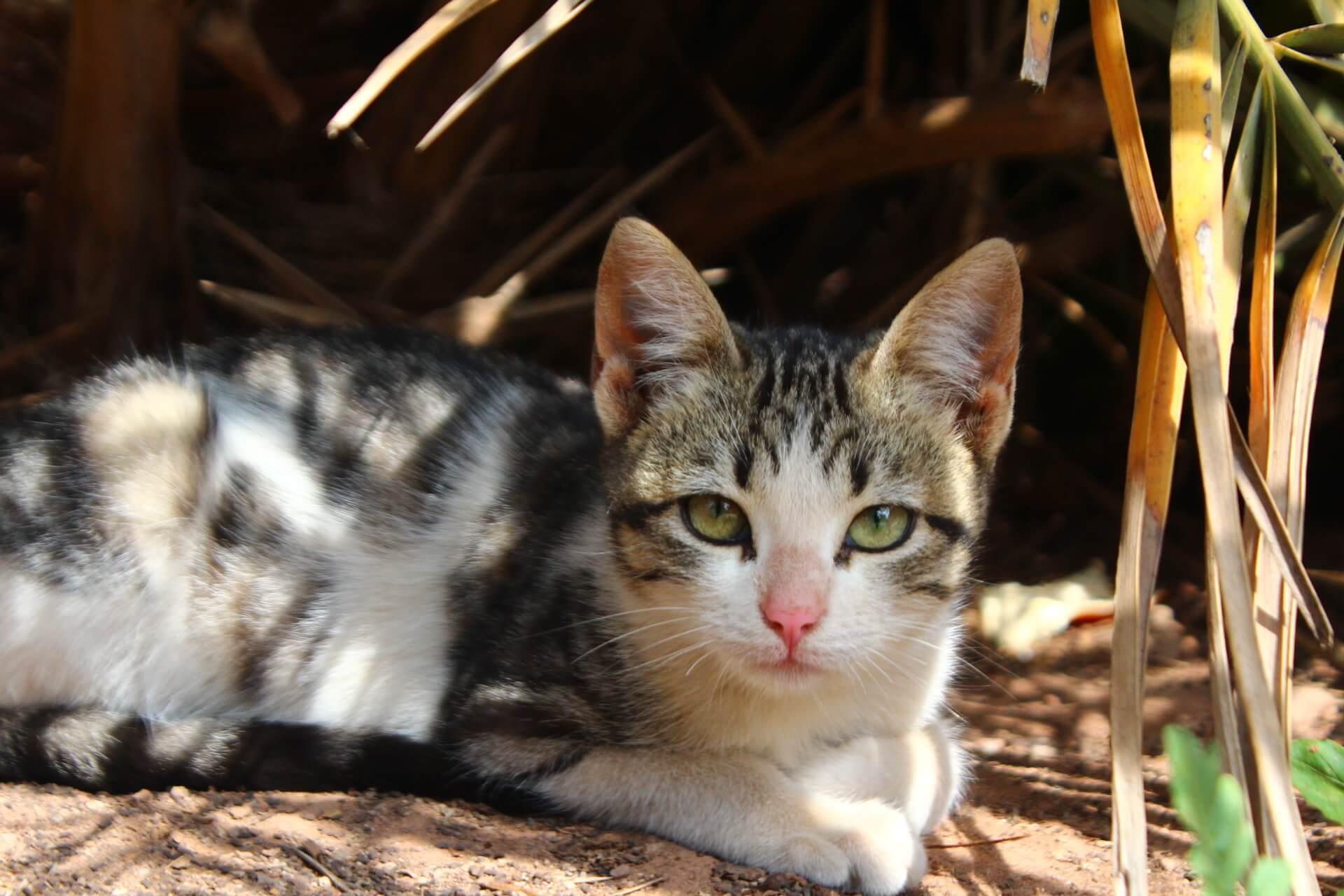 マラケシュ猫