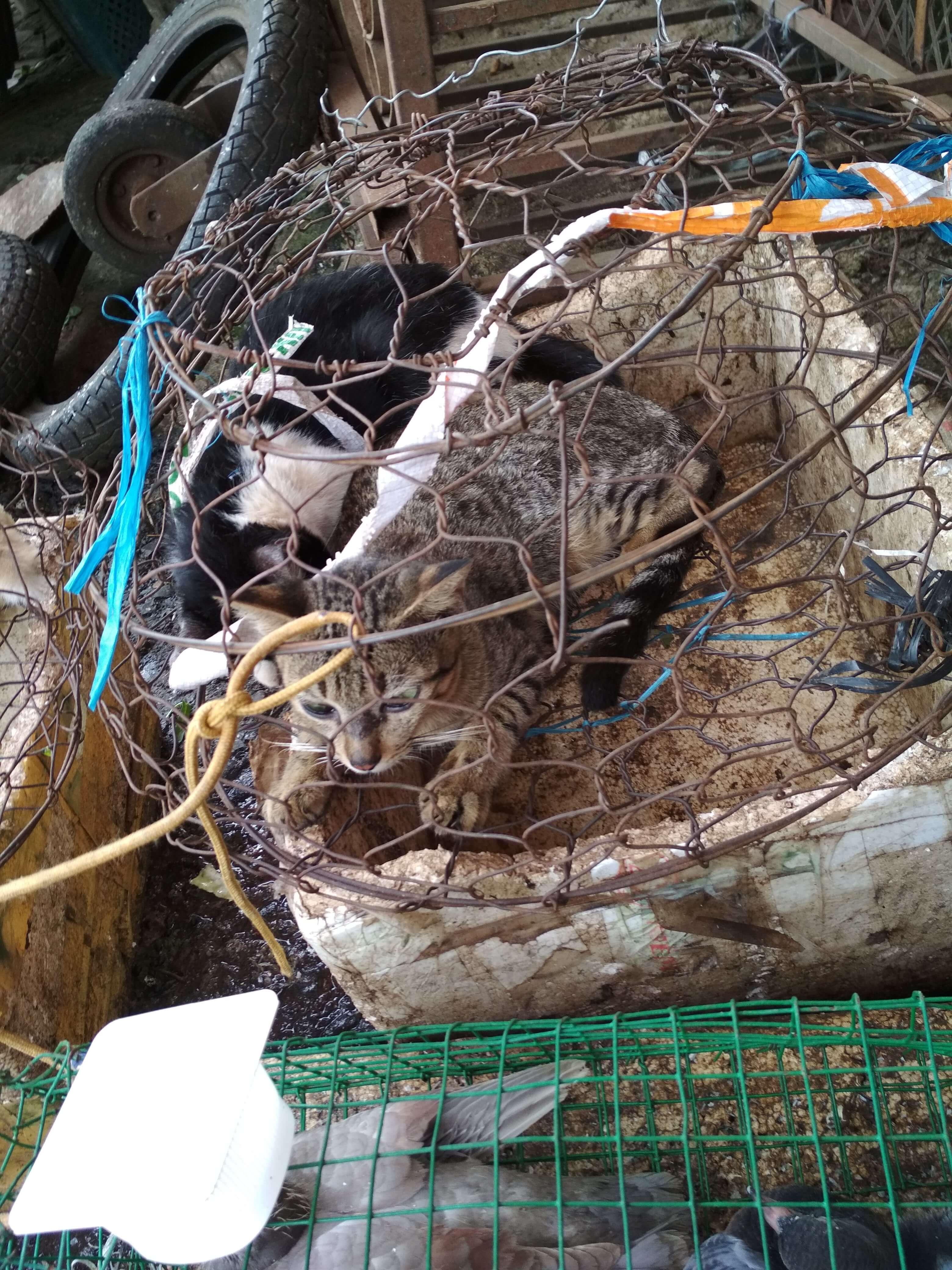 ベトナム市場猫