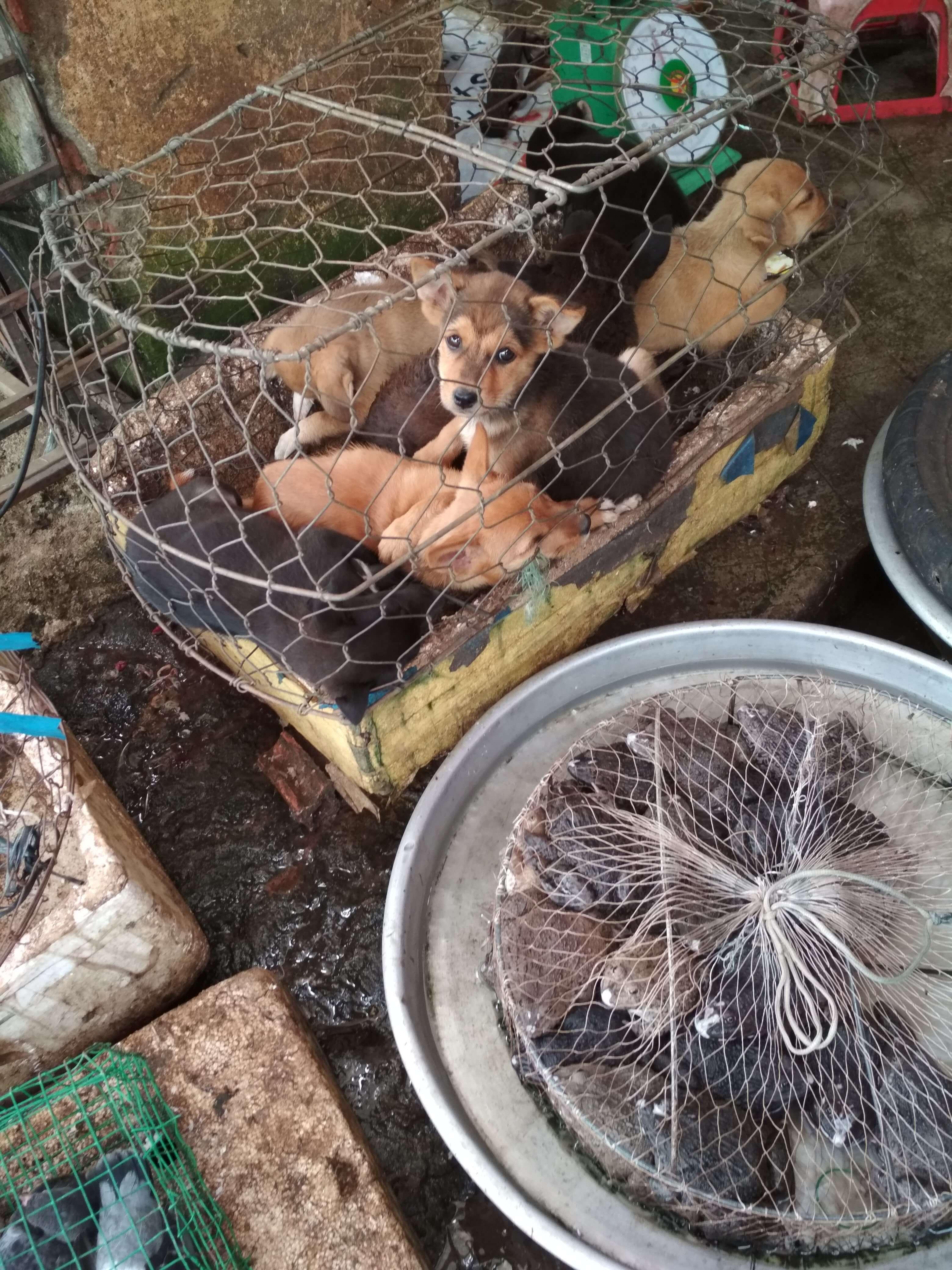 犬肉ベトナム
