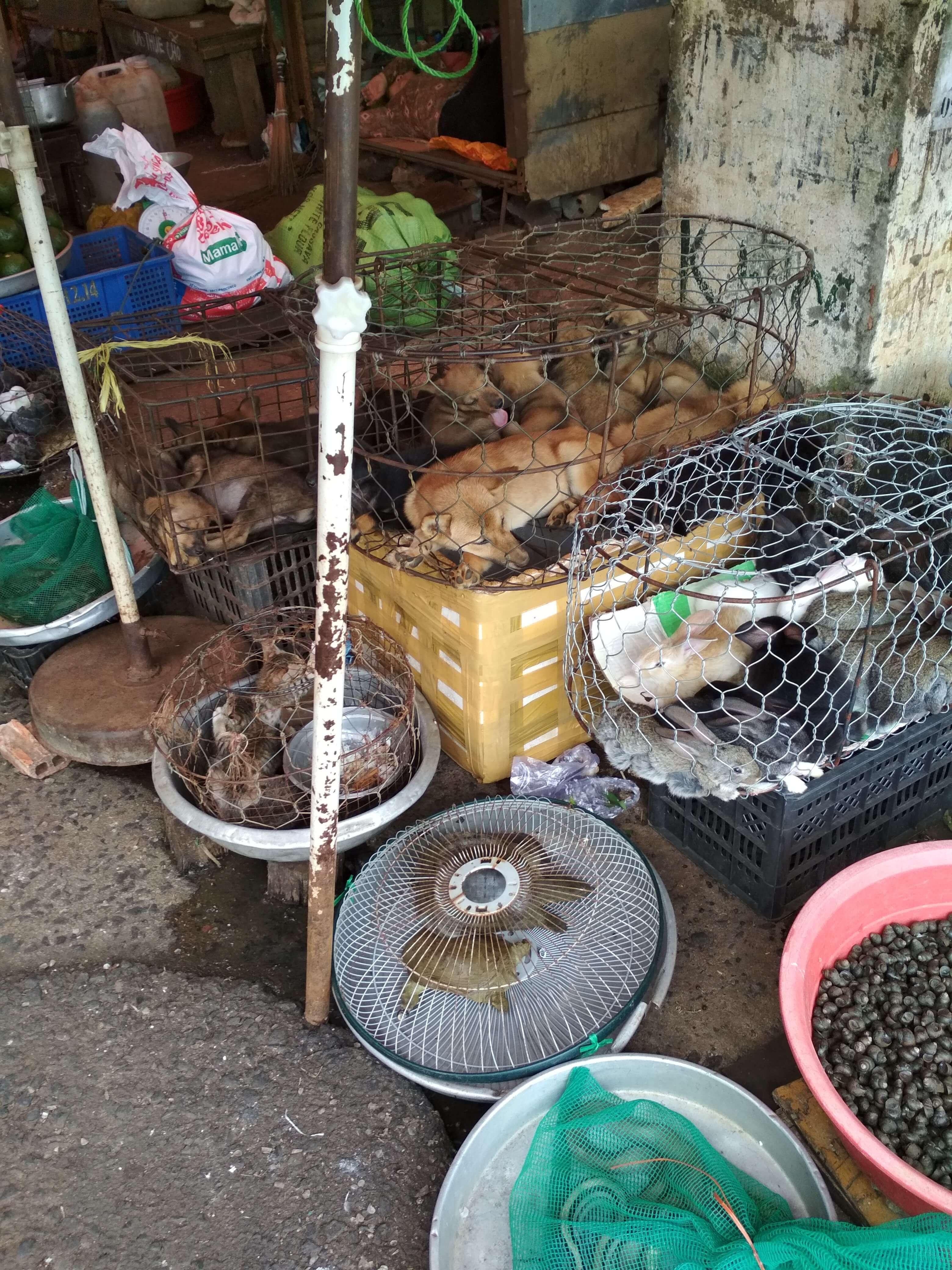 ベトナム犬市場