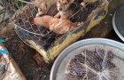 【ベトナム】食用の犬や猫を売る市場に潜入。世界の食文化について。